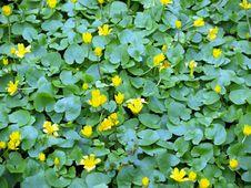 Free Yellow Flowers Stock Photos - 5143363