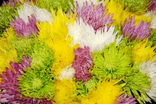 Free Bouquet Of Many-colored Flowers Royalty Free Stock Image - 5143426