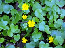 Free Yellow Flowers Royalty Free Stock Images - 5143549