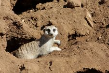 Free Animal Stock Photography - 5143842