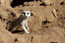 Free Animal Stock Photography - 5143852