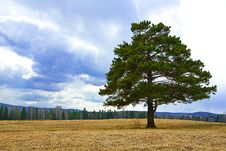 Free Alone Tree On Autumn Yellow Field Royalty Free Stock Photography - 5144167