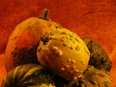 Free Gourds Stock Photography - 5144742