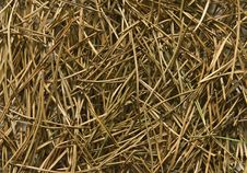 Free Pine Needles Royalty Free Stock Photo - 5145265