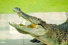 Free Alligator Opening Jaw Stock Image - 5145581