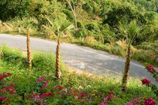 Free Tropical Empty Road Stock Photos - 5145593