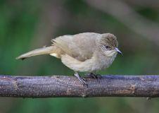 Free Bird On Tree Branch. 27-15 Jpg Stock Photography - 5145622