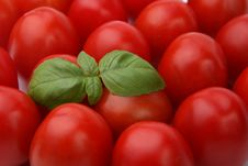 Free Tomatoes And Basil Stock Image - 5145731