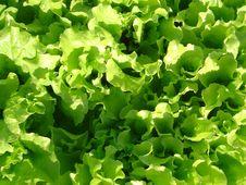 Free Green Salad. Stock Photography - 5145782