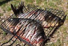 Free Raw Carps On Wire Rack Royalty Free Stock Image - 5146436