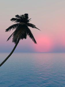 Free Palm Royalty Free Stock Photos - 5146748