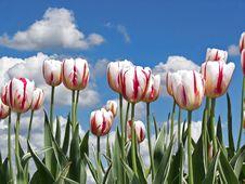 Free Spring Field Royalty Free Stock Photos - 5147548