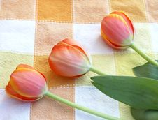 Free Coral Tulips Stock Image - 5147841