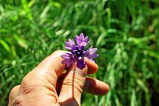 Free Wild Flowers In Full Spring, Mt. Wanda Royalty Free Stock Image - 5148076