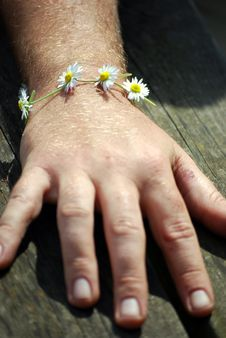 Free Man With Daisy Chain Bracelet Royalty Free Stock Photo - 5148255