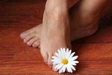 Free Feminine Feet Royalty Free Stock Photo - 5148325