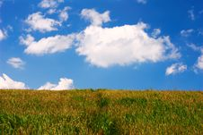 Free Summertime Meadow Stock Photos - 5149103