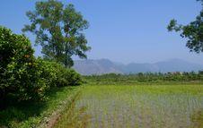 Free A Ricefield At China. Royalty Free Stock Photos - 5149788