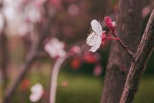 Free Red Leaves And Blooming Stock Photography - 51466872