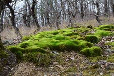 Free Moss In Crimea Hills Stock Photo - 51499840