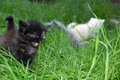 Free Group Of  Kitten In Grass Royalty Free Stock Image - 5154556