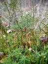 Free Moss Stock Photos - 5154583
