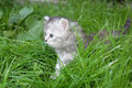 Free Grey Kitten In Grass Stock Image - 5154691