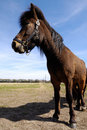 Free Pony In Profile Royalty Free Stock Photo - 5154835