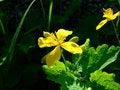 Free Yellow Flower Stock Photos - 5155293