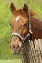 Free Horse And Fence Stock Photography - 5157542