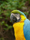 Free Blue And Gold Macaw Stock Photo - 5157740