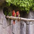 Free Parrots Stock Images - 5159094