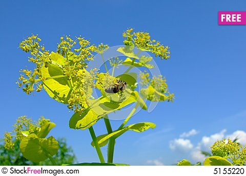 Free Bee Collestion Pollen Stock Photo - 5155220