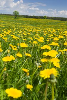 Free Spring Landscape. Royalty Free Stock Image - 5150216