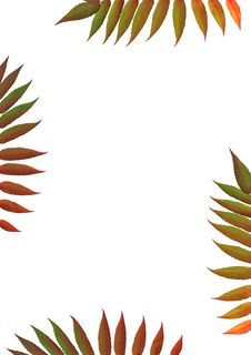 Free Rowan Leaf Border Royalty Free Stock Photography - 5150657