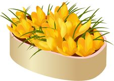 Free Crocus Stock Photos - 5151303