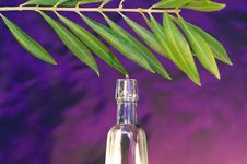 Free Oil Of The Olive Tree Stock Images - 5151304
