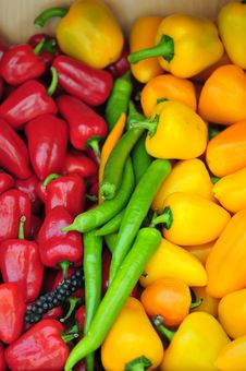 Free Mixed Vegetables Stock Images - 5151734