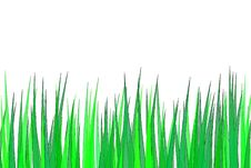 Free Grass Royalty Free Stock Images - 5152089