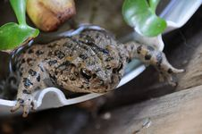 Free Toad Out For A Swim Stock Image - 5152201