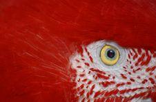 Free Scarlet Macaw Eye Royalty Free Stock Photos - 5152818