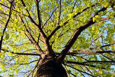 Free Tree Royalty Free Stock Images - 5153009