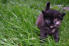 Free Grey And Black  Kitten In Grass Stock Image - 5154431