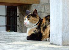 Free Cat Stock Photos - 5155113