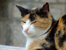 Free Cat Stock Images - 5155134