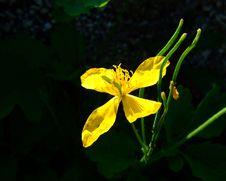 Free Yellow Flower Royalty Free Stock Photos - 5155318