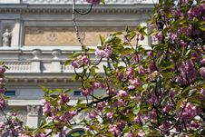 Free Spring Blossoms Alteoper Royalty Free Stock Photos - 5155458