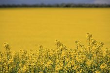 Free Yellow Field With Upper Strip Stock Photo - 5156550