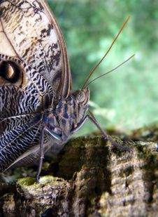 Free Butterfly Stock Photos - 5156743