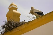 Free Stork In Top Of Roof Stock Photos - 5157153